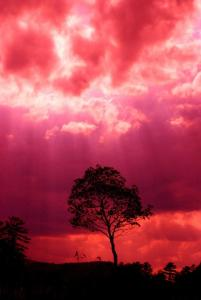 1-pink-storm-emily-stauring