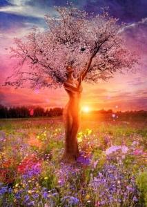 sun cherrytree