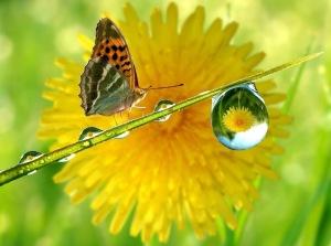 Crystal-Rain-Drop-Butterfly-HD-Wallpaper