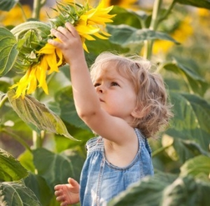 child-sunflower