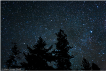 csillagos égbolt fenyő