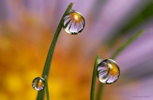 22-flower-water-drop-reflection-photography