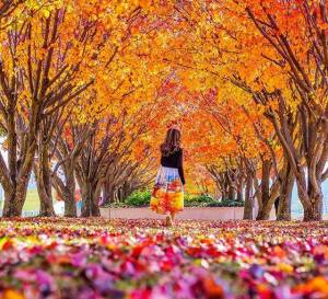 autumn-canberra-leaves
